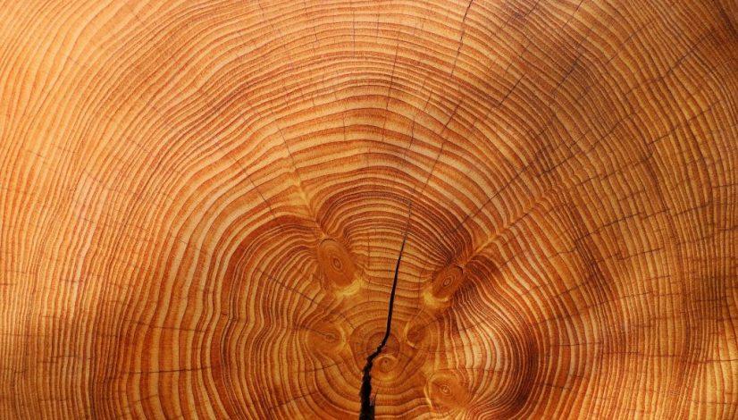 wood-3212803_1920